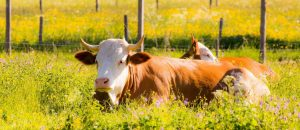 Bio as Real Safeguard for Environment and Livestock Health